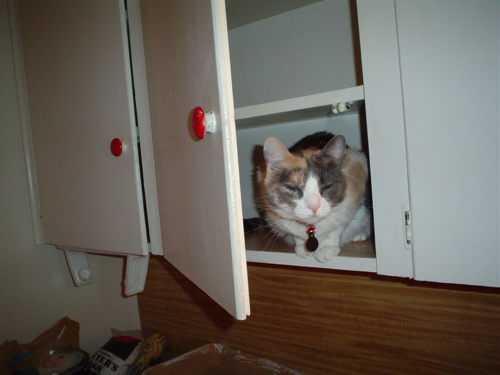Beatriceinthecabinet